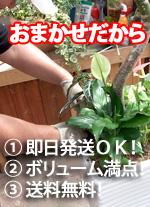 1)即日発送OK!2)ボリューム満点!3)送料無料!