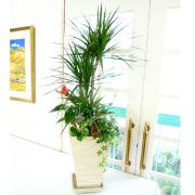 観葉植物ギフト おまかせ寄せ植え