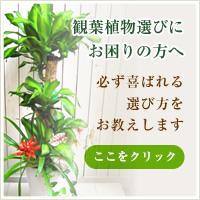 開店・開業祝いに贈るおすすめ観葉植物