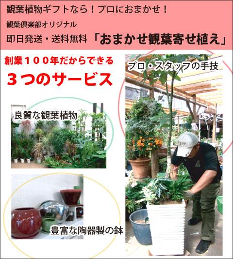 おまかせ観葉植物各種