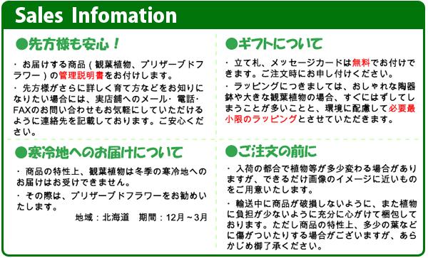 セールスインフォメーション:(1)管理説明書をお付けします。(2)メッセージカード・立て札は無料です。(3)観葉植物は生き物ですので、画像と多少異なる場合がございますが、ご了承願います。